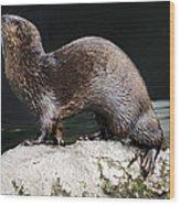 Sea Otter Wood Print