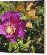 Sea Rose Srp Wood Print