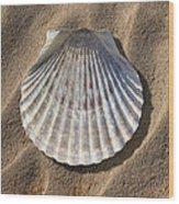 Sea Shell 2 Wood Print