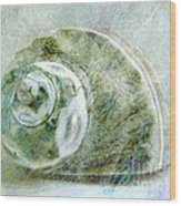 Sea Shell I Wood Print