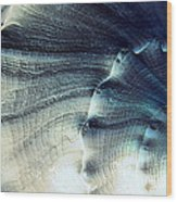 Sea Shell Wood Print