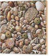 Sea Shells  Wood Print