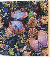 Sea Shells Sea Life Wood Print