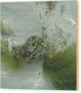 Sea Slug Wood Print
