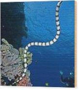 Sea Snake Wood Print