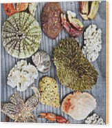 Sea Treasures Wood Print