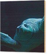 Sea Turtle In Deep Ocean Wood Print