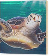 Sea Turtle Wood Print by Mike Royal