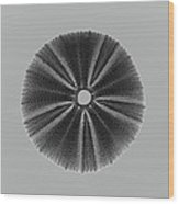 Sea Urchin 1 Wood Print