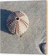 Sea Urchin And Shell Wood Print