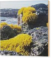 Sea Weed Wood Print