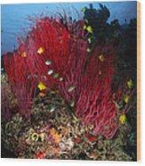 Sea Whips And Soft Coral, Fiji Wood Print