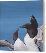 Seabird Love Wood Print