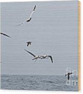 Seabirds In Flight Wood Print by Louise Heusinkveld