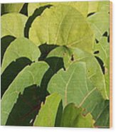 Seagrape Leaf Layer Wood Print
