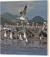 Seagul Fly By Wood Print