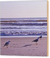 Seagull Alliance Wood Print