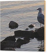 Seagull At Dusk Wood Print