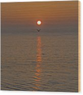 Seagull At First Light Wood Print