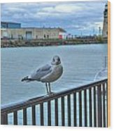 Seagull At Lighthouse Wood Print
