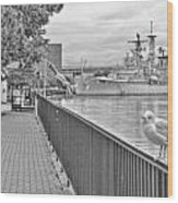 Seagull At The Naval And Military Park Wood Print