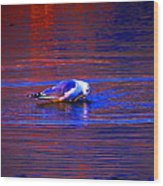 Seagull Bathing In Dramatic Light Wood Print by Catherine Natalia  Roche