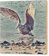 Seagull Flaps Wood Print