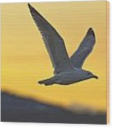 Seagull Flying At Dusk With Sunset Wood Print
