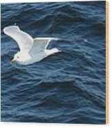 Seagull Flying Over The Waves Wc  Wood Print