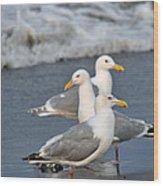 Seagull Fusion Wood Print