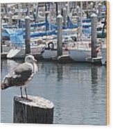 Seagull In Boatwatch Wood Print