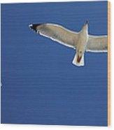 Seagull In Flight Wood Print by Detlev Van Ravenswaay