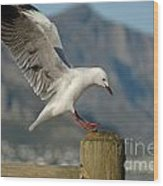 Seagull Landing On Pole Wood Print