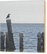 Seagull On A Post Wood Print