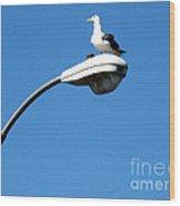 Seagull On Street Light Wood Print