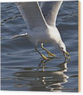 Seagull On Water Wood Print