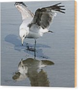 Seagull Reflection Wood Print
