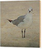 Gull Wood Print