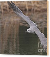 Seagull Seagull On The Move Wood Print