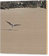 Seagull Spreads Its Wings On The Beach  Wood Print