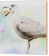 Seagull Steeling Food Wood Print