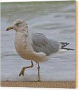 Seagull Stomp Wood Print