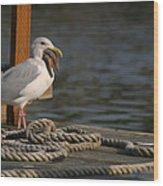 Seagull Swallows Starfish Wood Print