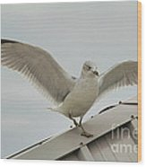 Seagull With Character Wood Print