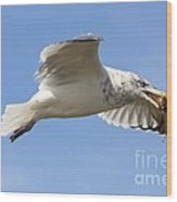 Seagull With Snail Wood Print