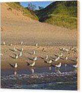 Seagulls At The Bowl Wood Print