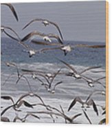 Seagulls Fly Over Surf Wood Print
