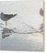 Seagulls In A Shimmer Wood Print