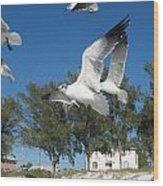 Seagulls On Anna Maria Island Wood Print