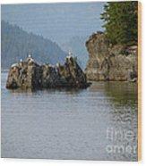 Seagulls On Rock Wood Print